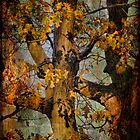Autumn Oaks In Dance Mode by Lois  Bryan
