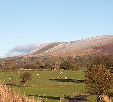 Pendle Hill  by Irene  Burdell