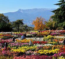 Nikita Botanical Gardens  Chrysanthemum Ball  by Rick  Todaro