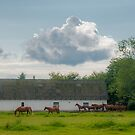 Horses and Barn by Michael Brewer