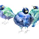 Funny exotic birds by Tanor