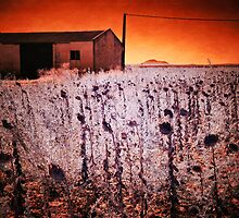 Infrared photography - sunflower field, Alange, Spain by Wendy  Rauw