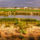 Desert Farmland by George Lenz