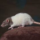 Zoey - Dumbo Rat by sogr00d