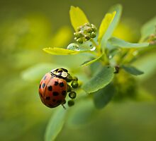 Spring Time Lady Bug by ChickensNest