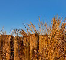 Hopeman, marram in the wood. by JASPERIMAGE