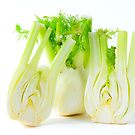 Fennel on white background by 7horses