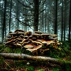 It's A low Life ~ Wild Mushrooms ~ by Charles & Patricia   Harkins ~ Picture Oregon