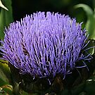 Botanical Beauty by Monnie Ryan