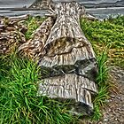 La Push, Washington by GregorDyer