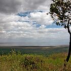 Tree of Ngorongoro by phil decocco