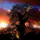Dramatic Sunset Tree by Chris Hood