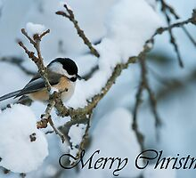 Chickadee Christmas Card 1 by Michael Cummings