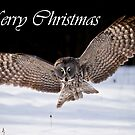 Great Gray Owl Christmas Card 7 by Michael Cummings