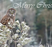 Great Gray Owl Christmas Card 10 by Michael Cummings