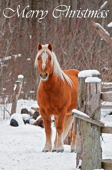 Horse Christmas Card 1 by Michael Cummings