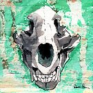Bear Skull by AaronBir
