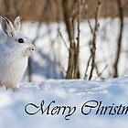 Snowshoe Hare Christmas Card 6 by Michael Cummings