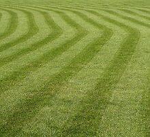 Green grass pattern. by FER737NG