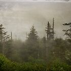 Clingman's Dome by Karen  Burgess
