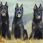 Beauceron Dog by Oldetimemercan