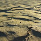 Sun-Kissed Striated Seaside Sand by Mary-Elizabeth Kadlub