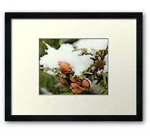 ceder tree with fresh layer of snow Framed Print