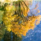 Reflections I by Anne  McGinn