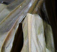 Weathered Leaf by WildestArt
