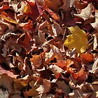 Colourflul Fallen Leaves by Rebecca Bryson