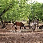 Horses Drinking by Mark Ingram Photography