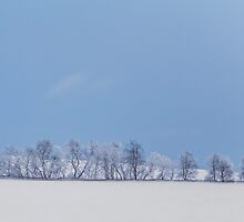 winter treeline by Janice Squires