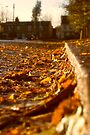 Autumn in Enfield by Nigel Bangert