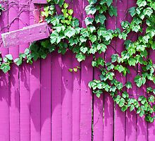 Pink Fence and Foliage by marybedy