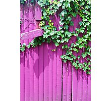 Pink Fence and Foliage Photographic Print