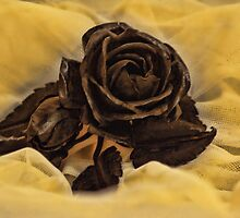The Black Rose by Deborah McGrath
