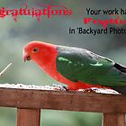 Banner Entry for 'Backyard Photography' by Staffaholic