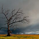 Gothic tree by Barry Feldman