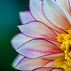 Flowerscapes - Dahlia Polka by lesslinear