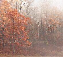 October Fog by April Koehler