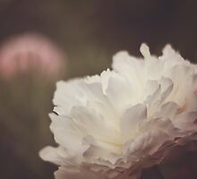 White and Pink Peonies by dbrender