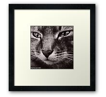 My Little Gracie, by Robert Lancaster Framed Print