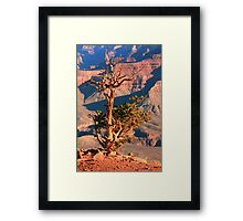Weatherd old Juniper Tree on the Canyon Rim Framed Print