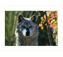 Yellowstone Timber Wolf Art Print