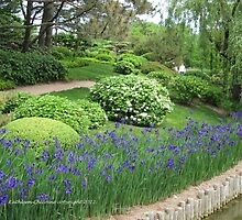 Iris Among the Foliage by Kathie  Chicoine