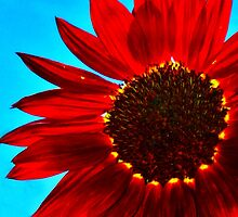Chocolate Sunflower Against Blue Sky by Denise Cordner