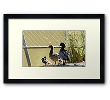 Wood duck family outing Framed Print