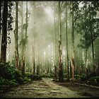 Dandenong Ranges by jamjarphotos