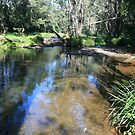 Winter Water Hole by aussiebushstick