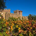 Fall at the Winery by Barbara  Brown